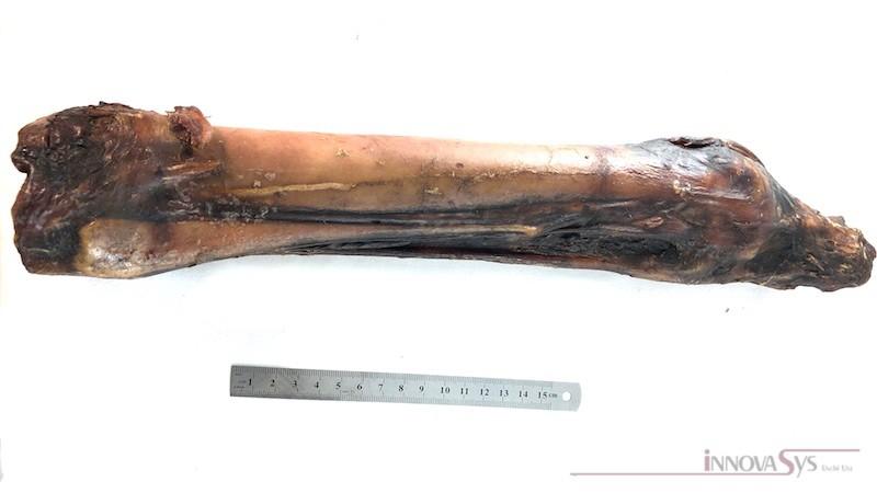 Pferdeknochen Knochen mit Sehne